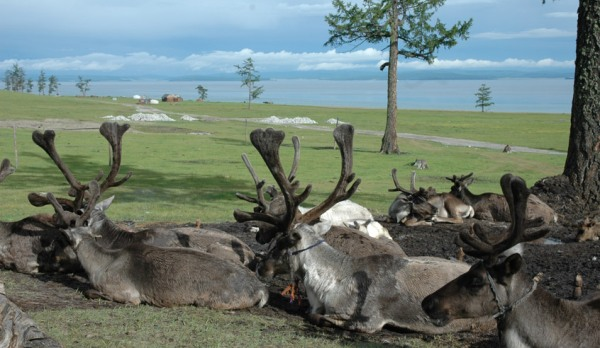 Lake Khobsugol and its reindeer population