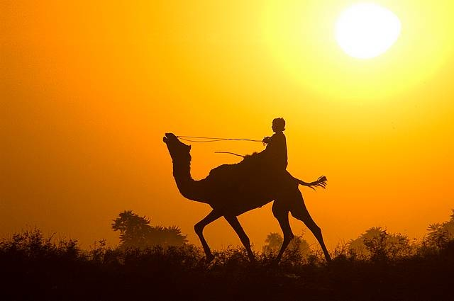 Photo by Annie Katz | Indian boy rides his camel home after a day of festivities at the Pushkar Camel Festival in Pushkar, India.