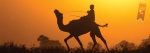 1st place, boy riding camel at sunset in Pushkar, India (Annie Katz )