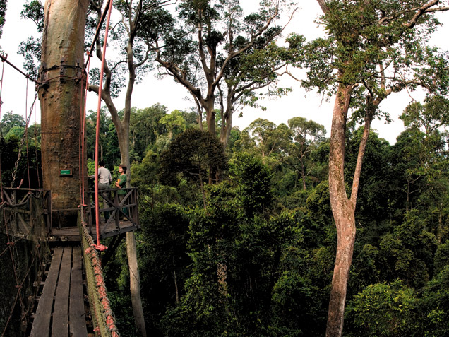 Forests of Borneo