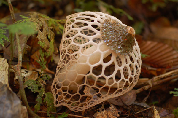 Mushroom_Small_2013