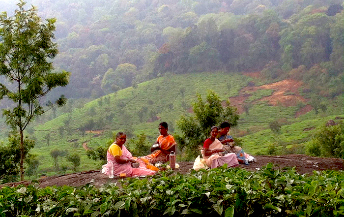 Munnar Ladies having Lunch