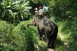 Elephant Rides in Asia